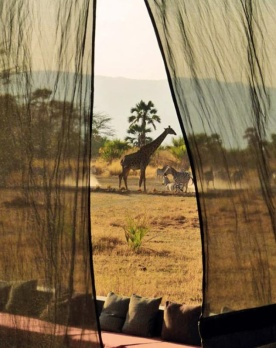 La savane, Kenya - Photo Pinterest